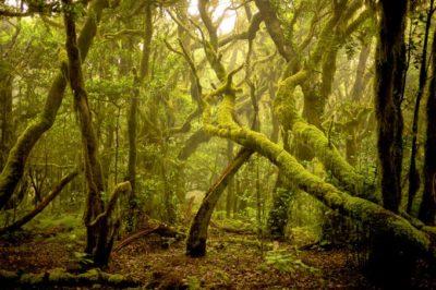 Pura Vida Parques Naturales.