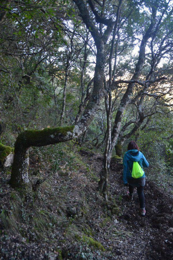 Pico De La Miel 2