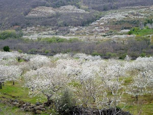 Valle Del Jerte 8