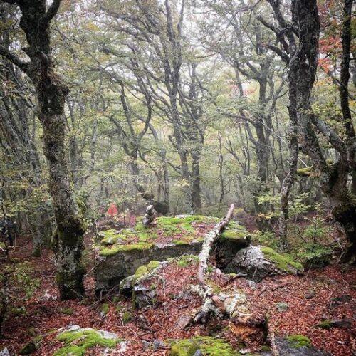 Selva Irati 2